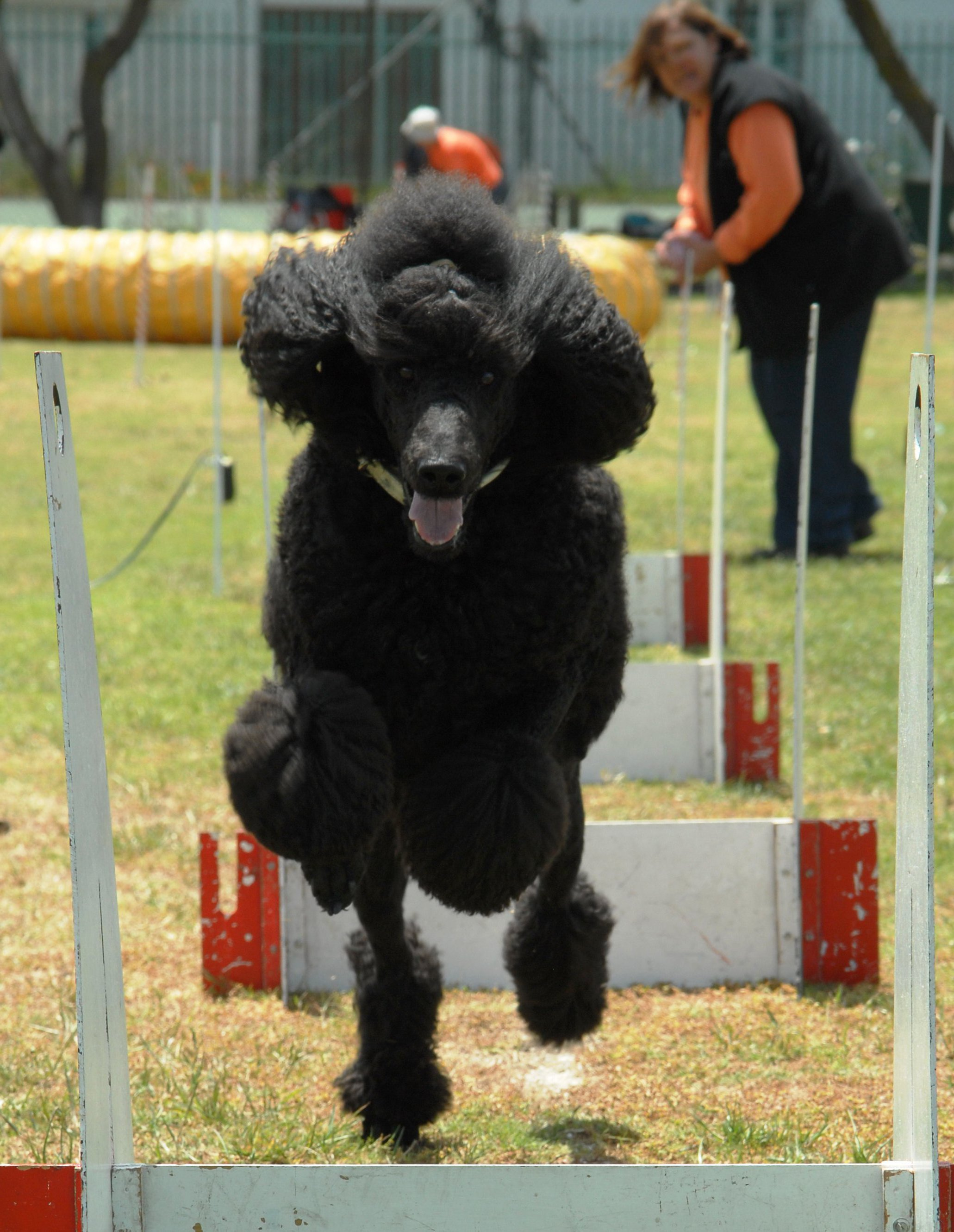 flyball_0