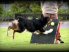 flyball-2
