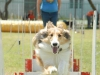 flyball-2_0