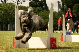 flyball-1
