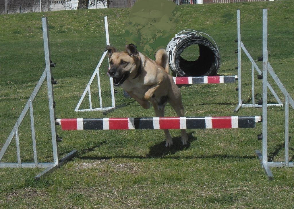 SCOOBY HURDLING